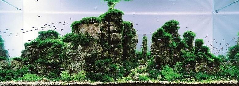 Аквариум для рыб-петушков