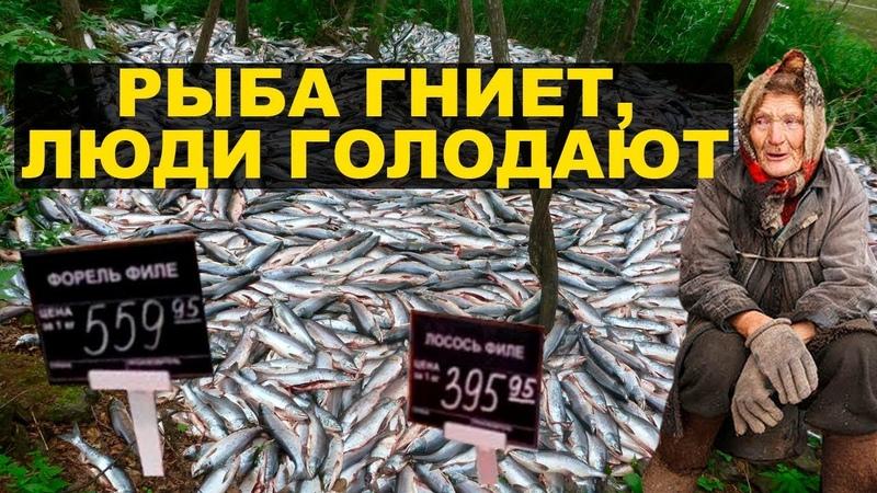 На Камчатке уничтожают рыбу, чтобы не снижать цену