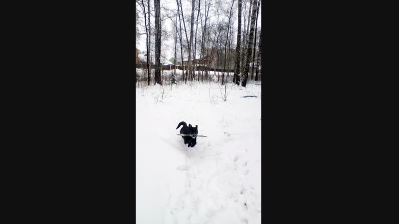Зимняя тренировка в лесу 2