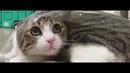 Cutest Cats Compilation 2018 | коты, коты с озвучкой, коты воители, коты поют, коты приколы, котики
