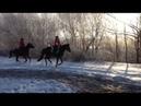 Подготовка молодой лошади