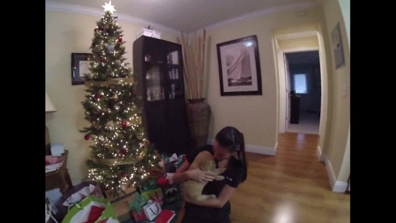 Wife gets surprised with a new puppy a day after her dog died.