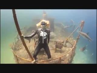 Бесстрашная девушка спускается в воду, кишащую акулами, и спокойно плавает среди них.✈🌴☀