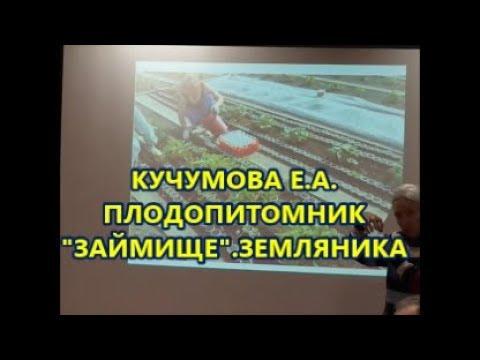Кучумова Е.А. ПлодопитомникЗаймище.Земляника.