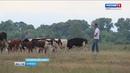 Большие планы начинающего брянского фермера