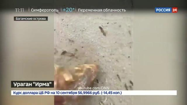 Новости на Россия 24 • Ураганы в США Ирма пришла уничтожить то, что не разрушил Харви