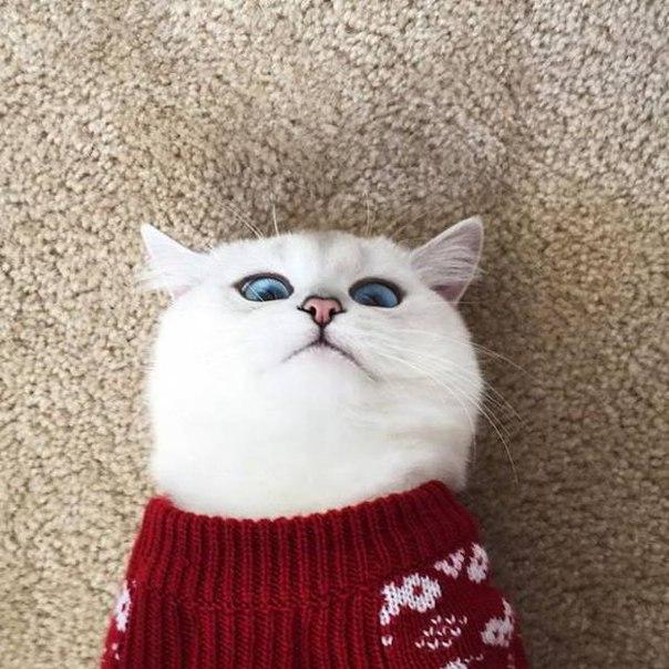 Милая Санта-кошечка