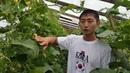 Основные принципы выращивания ОГУРЦА. ПИТАНИЕ. ЧАСТЬ2. принципы не путать с нормами