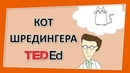 🔶 Кот Шредингера [Ted-Ed на русском]