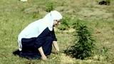 I'm a Weed Nun