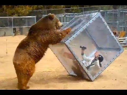 Hayvanat Bahçesi Hayvan Saldırıları😹★ [2018]