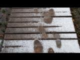 В Вологде выпал первый снег