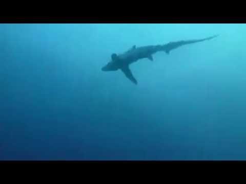 Лисья Акула, Филиппины, о Малапаскуа