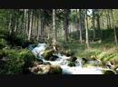 Бурлящий ручей Лес / Seething stream Forest
