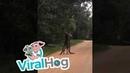 Two Roos Scrapping || ViralHog