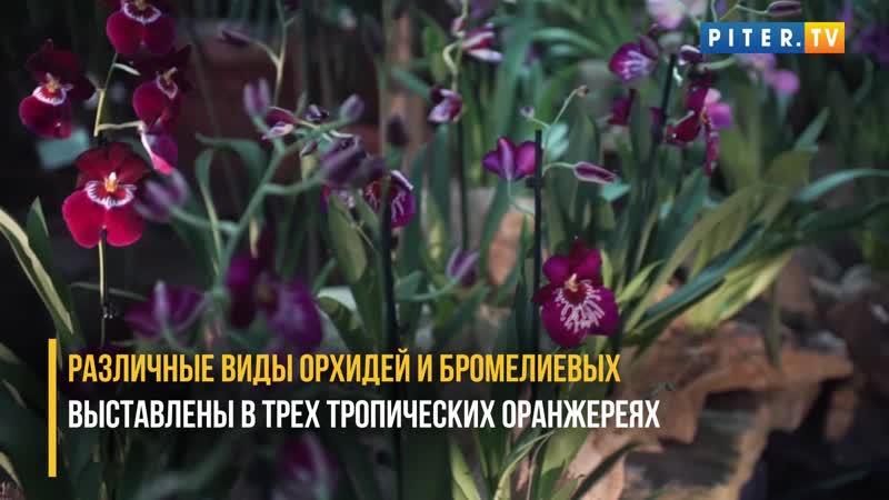 В Ботаническом саду снова рассыпались Осколки радуги