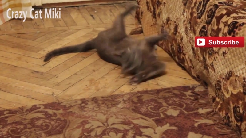 кошка играть , Забавные животные видео 24