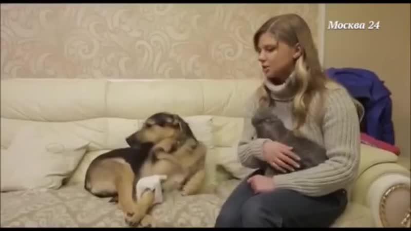 Заядлая собачница Настя Задорожная рассказала о своем зоопарке