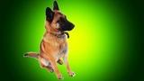 Веселая Песня Про Собаку Детская Музыка 2019 Премьера Клипа