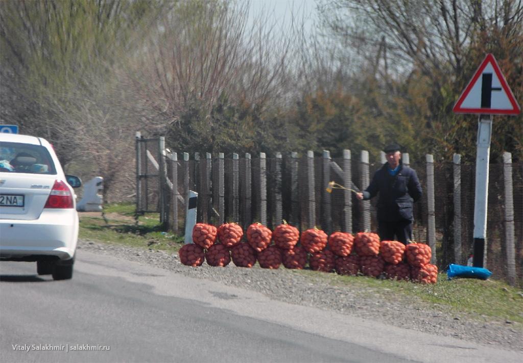 Картошка на обочине, дорога из Самарканда в Ташкент 2019