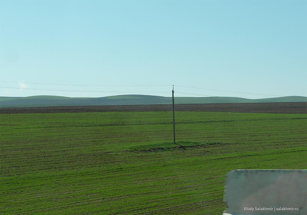 Поля на маршруте между Самаркандом и Ташкентом 2019