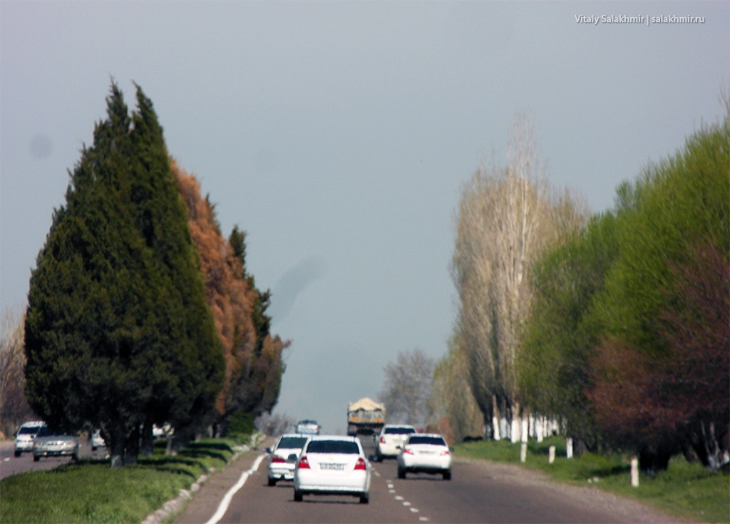 Хвоя на дороге из Самарканда в Ташкент 2019