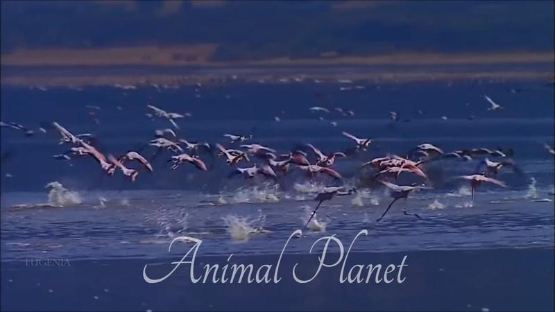 Релакс видео Для Души! Путешествие В Мир Природы | Animal Planet