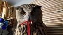 Ёлка нарядилась! Сколько простоит нарядная Новогодняя сова без регистрации и угу