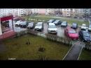 Падение кота на авто (смотреть с 0:40)