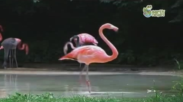 Flamingo Michael Jackson