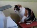 Прикол про кота с принтером