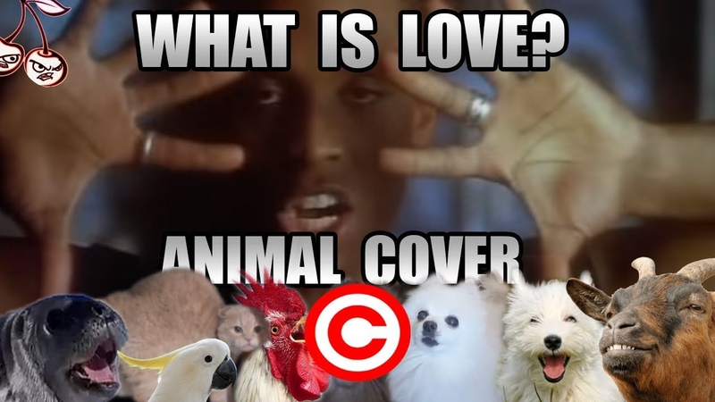 Haddaway - What Is Love (Animal Cover) [REUPLOAD]