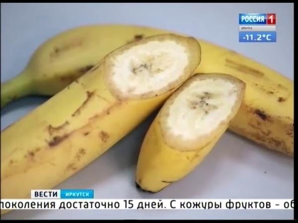 До России добралась муха горбатка. Смертельно опасное насекомое ищут и в Иркутской области