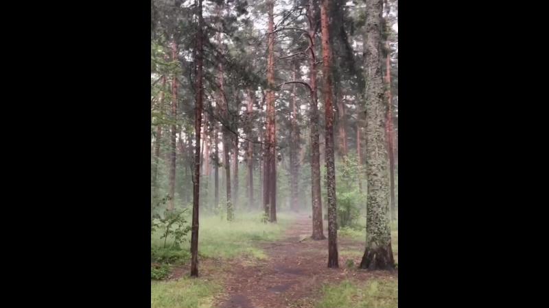 Невероятный лес где будет проходить воркшоп 28 июля