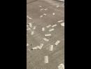 У инкассаторов на шоссе произошли проблемы с дверьми и они открылись после чего оттуда начали вылетать 20 ти долларовые купюры