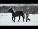 О подготовке лошади на вожжах