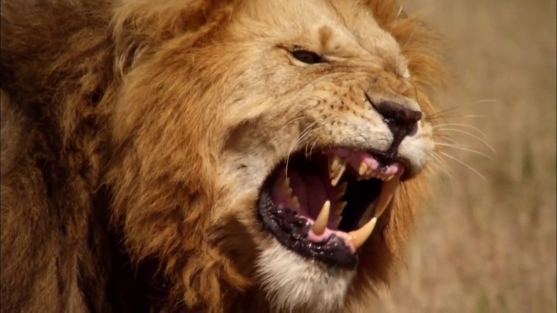 야생 동물 사이의 전쟁🔥가장 놀라운✔️동물 의 공격 인간 ✔️🐼