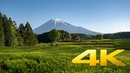 Obuchi Sasaba and Mt. Fuji - Shizuoka - 大淵笹場 - 4K Ultra HD