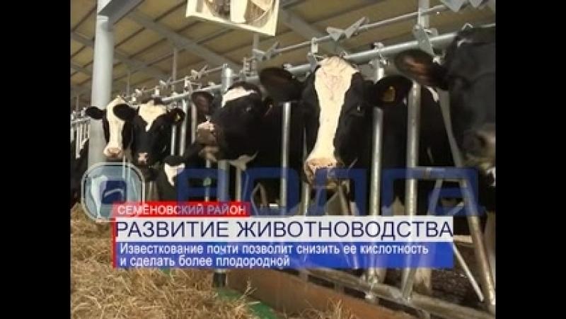 Аграрии из Семеновского района предложили свой способ повышения плодородности земли