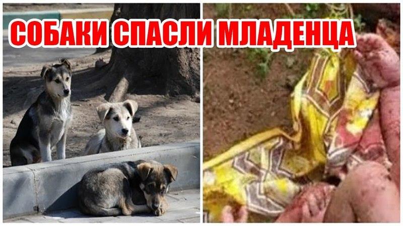 Собаки охраняли ребенка, брошенного умирать | Собаки спасли ребенку жизнь | Спасение младенца