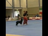 Цыганочка -в  исполнении  Дамы с собачкой ( 480 X 480 ).mp4