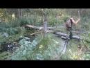 Как ходить по болоту poroda boloto scscscrp