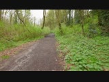 Walking in the Woods. Episode 2 - 1.5 HRS - Virtual Hike, Relaxing Sound of Nature _ 4K Video