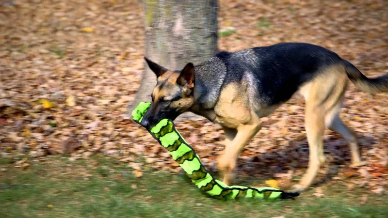 Outward Hound Invincible Snakes Coupaw v2