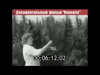 Пионеры и конопля. Из цикла ☭ Советские ужасы