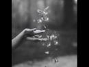 I l♡ve more butterflys