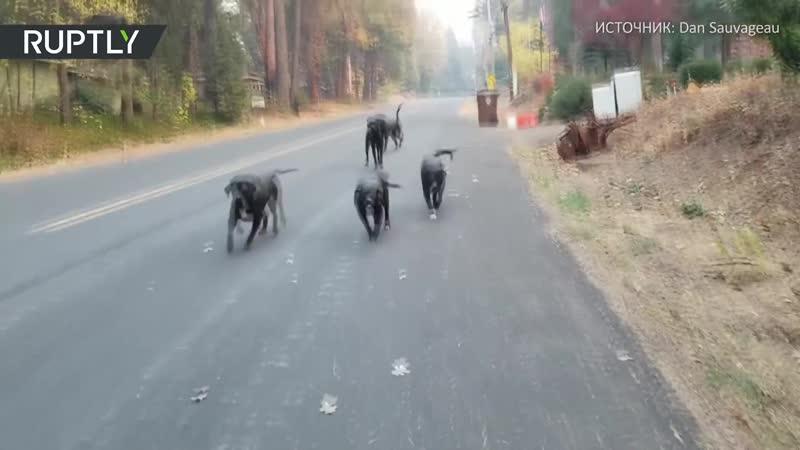 Местные жители спасают животных от лесных пожаров в Калифорнии