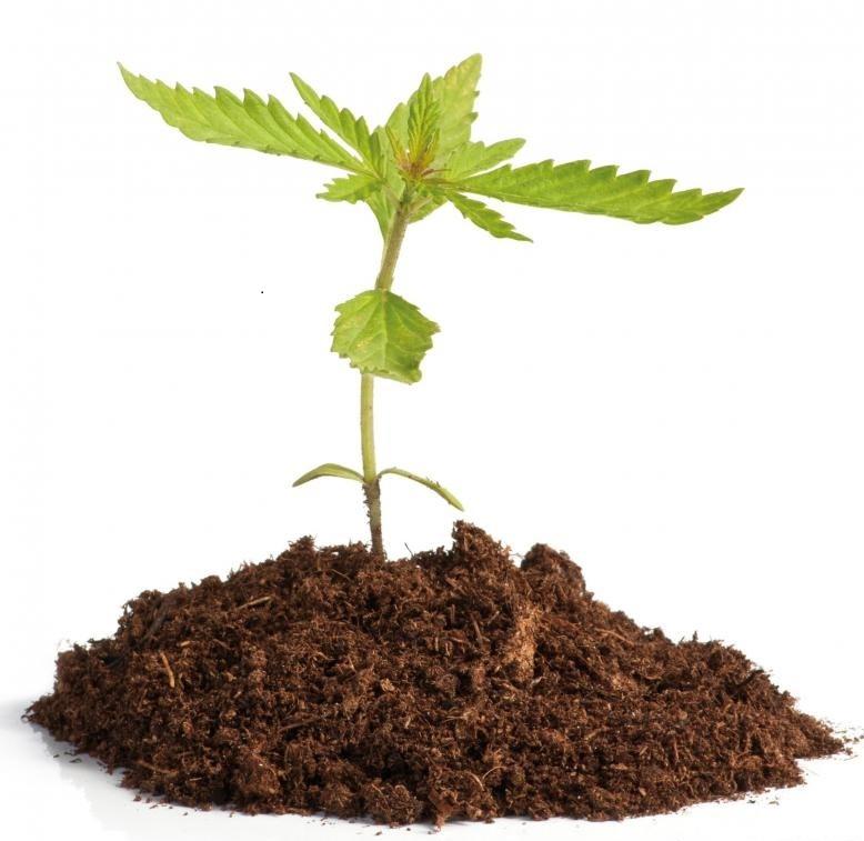 Медицинская марихуана может иметь меньше побочных эффектов, чем другие традиционные способы лечения боли.