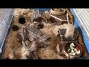Норные жители Сави и Кими в обновленном интерьере дюны