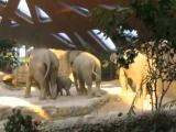 Ausrutscher von Baby Elefant Omysha - Zoo Z